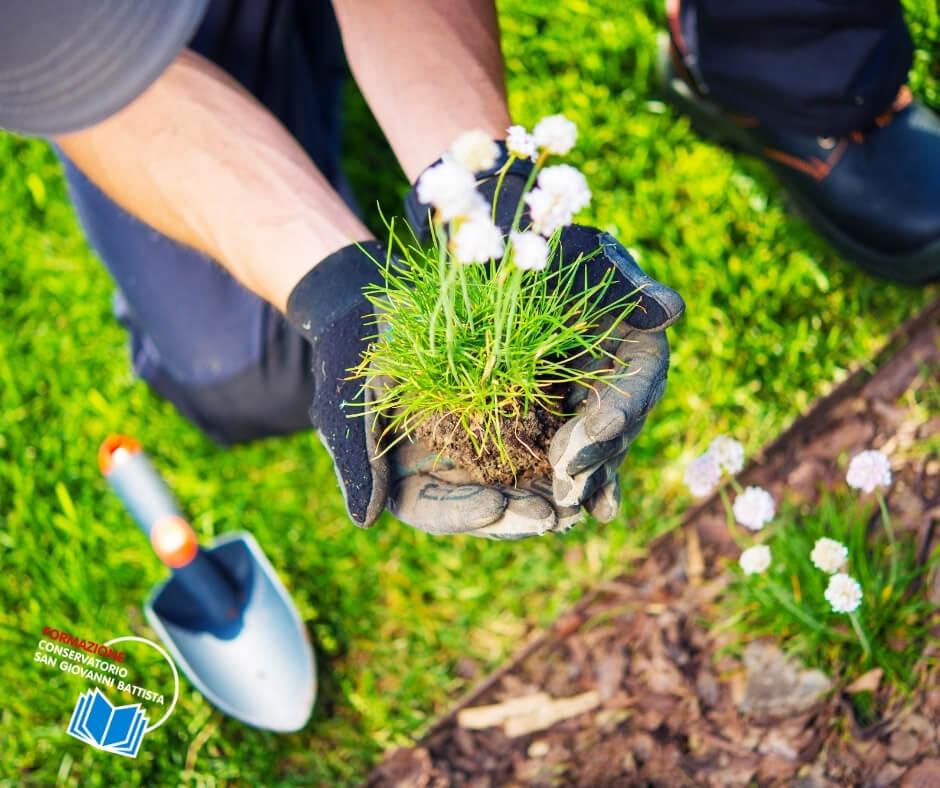 manutentore del verde piante